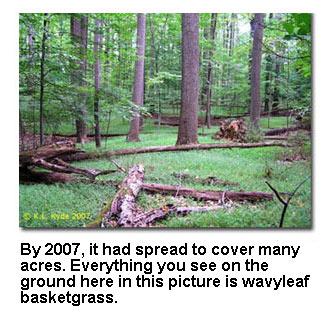 franklinmslibrary / Steven Gross's Invasive Species Project
